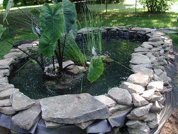 Backyard Turtle Pond