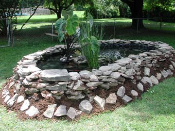 Backyard Turtle Pond